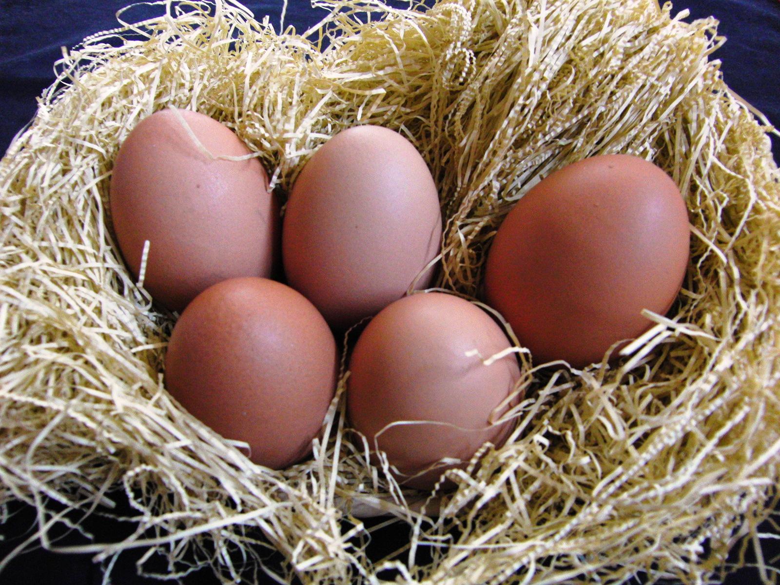 有精卵 野たまご @京都・大原 山田農園「1玉85円の平飼いこだわり卵」実食レビュー